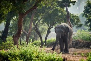 Arignar Anna Zoological Park - Best Places To Visit in Chennai