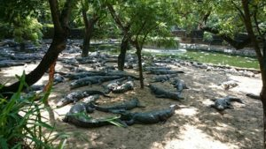 Madras Crocodile Bank - Best Tourist places in Chennai