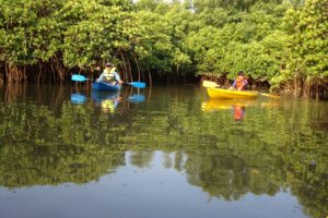 Backwater Kayaking in Goa - Fun Things To Do in Goa