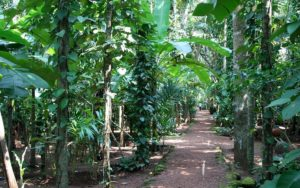 Spice Plantations Walk in Goa- Fun Things To Do in Goa