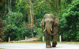 Reasons to visit Thailand - WildLife in thailand