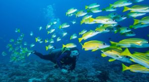 Scuba diving - water sports in chennai