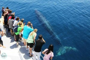 Dolphin and Whale Watching Safari - Tourist Attractions in Auckland
