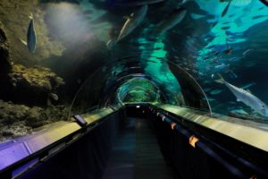 Kelly Tarlton's Aquarium - Tourist Attractions in Auckland