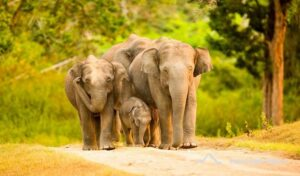 Bandipur National Park, Karnataka - Best National Parks in India