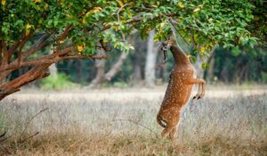 Deer Park - Best Places to Visit in Ooty