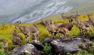 Eravikulam National Park - Best National Parks in India