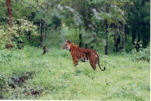Hazaribagh National Park - Best National Parks in India