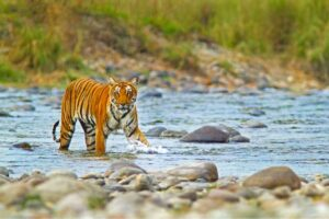 Jim Corbett National Park - Best National Parks in India