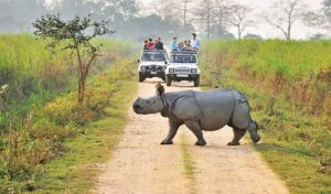 Kaziranga National Park - Best National Parks in India
