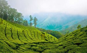 Munnar - Weekend Trips From Chennai
