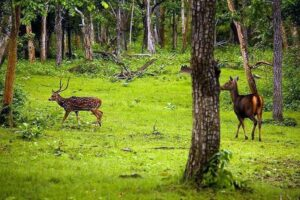 Nagarhole National Park - Best National Parks in India
