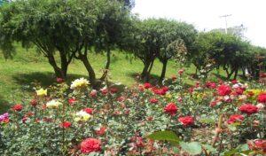 Ooty Rose GardenDeer Park - Best Places to Visit in Ooty