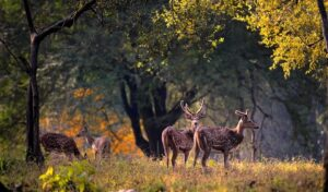 Padmaja Naidu Himalayan Zoological Park - Best Things To Do In Darjeeling