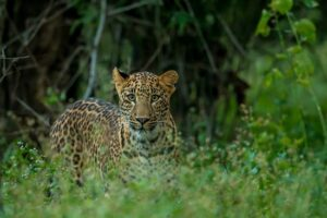 Panna National Park - Best National Parks in India