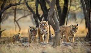 Pench National Park - Best National Parks in India