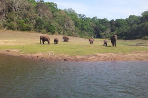 Periyar National Park - Best National Parks in India