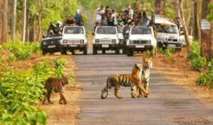 Ranthambore National Park - Best National Parks in India