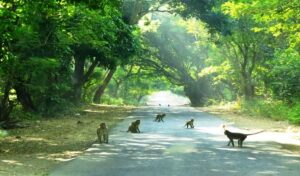Sanjay Gandhi National Park - Best National Parks in India