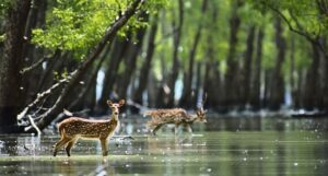 Sunderban National Park - Best National Parks in India