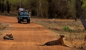 Tadoba National Park - Best National Parks in India