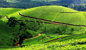 Tea Tour at Dooars - Best Things To Do In Darjeeling