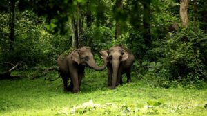 Wayanad National Park - Best National Parks in India