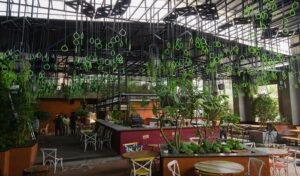 Green - Vegetarian Restaurants in Bangalore