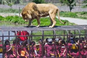 Bannerghatta National Park - Top Places to Visit in Bangalore