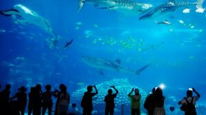 Sea World Aquarium - Best Places to Visit in Rameshwaram