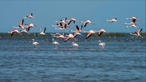 Water Bird Sanctuary - Best Places to Visit in Rameshwaram