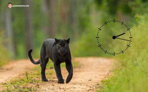 Best Time to Visit Kabini Forest Safari - Kabini Forest Safari