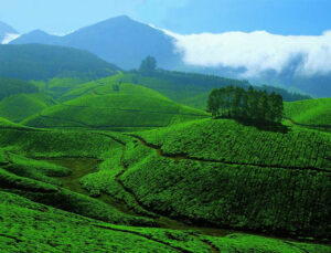 Best Time to Visit Munnar - Things to do in Munnar