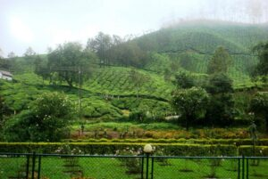 Blossom International Park - Things to do in Munnar