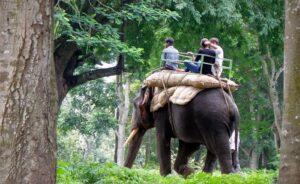 Elephant Safari - Kabini Forest Safari