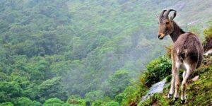 Eravikulam National Park - Things to do in Munnar