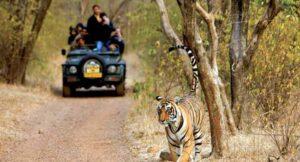 Jungle and Jeep Safari - Kabini Forest Safari