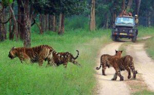 Kabini Backwaters Forest safari - Kabini Forest Safari