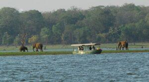 Kabini Forest Area - Kabini Forest Safari