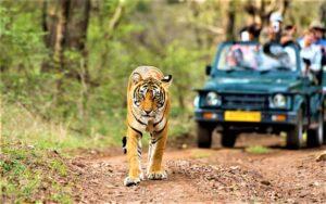 Kabini Forest Safari - An Amazing Experience