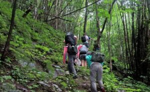 Nature walk - Kabini Forest Safari