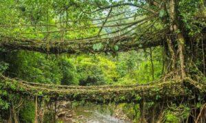 Cherrapunji - Places to visit near Shillong