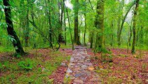 Mawphlang - Places to visit near Shillong