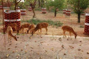 Sarnath Deer Park - Best Places To Visit in Varanasi For Couples
